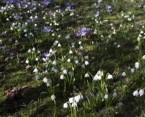 Ursprung Frühling