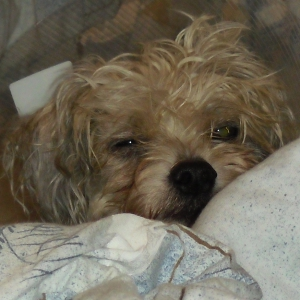 Hunde aus dem Tierschutz bringen ihre Geschichte mit in ihre neue Familie