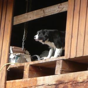 Auch ungeeignete Haltungsbedingungen prägen einen Hund