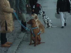 Bunte Hunde in der Stadt