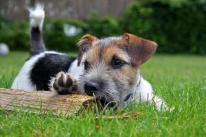 Frische Luft, Bewegung, spielen ... Spaß mit Hund