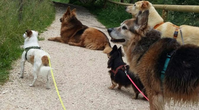 Beziehungspflege – mit Hunden sprechen