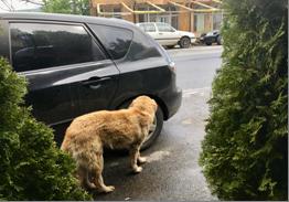 Straßenhund c) Murati