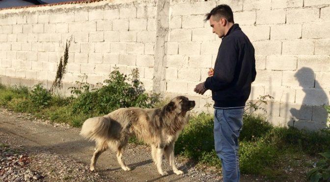 strassenhund in makedonien