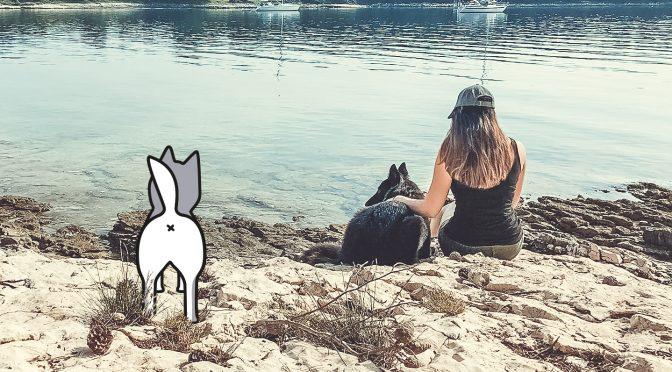 Online-Plattformen, Vernetzen für Hundemenschen