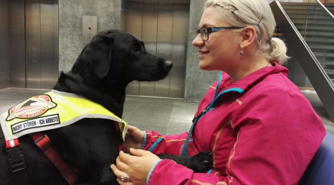 Hunde, die leben helfen