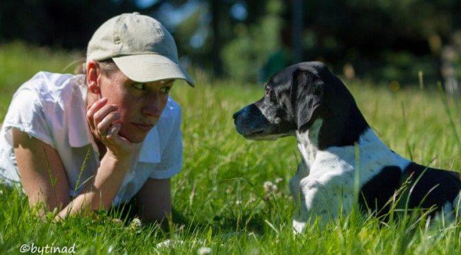 Hundeschule goes Internet