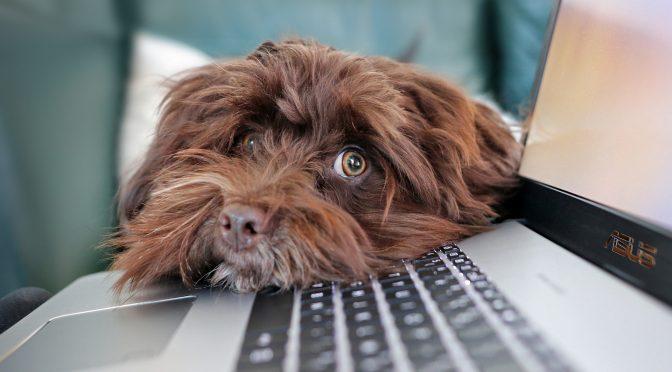 Hunde und Wissenschaft – Das Clever Dog Lab