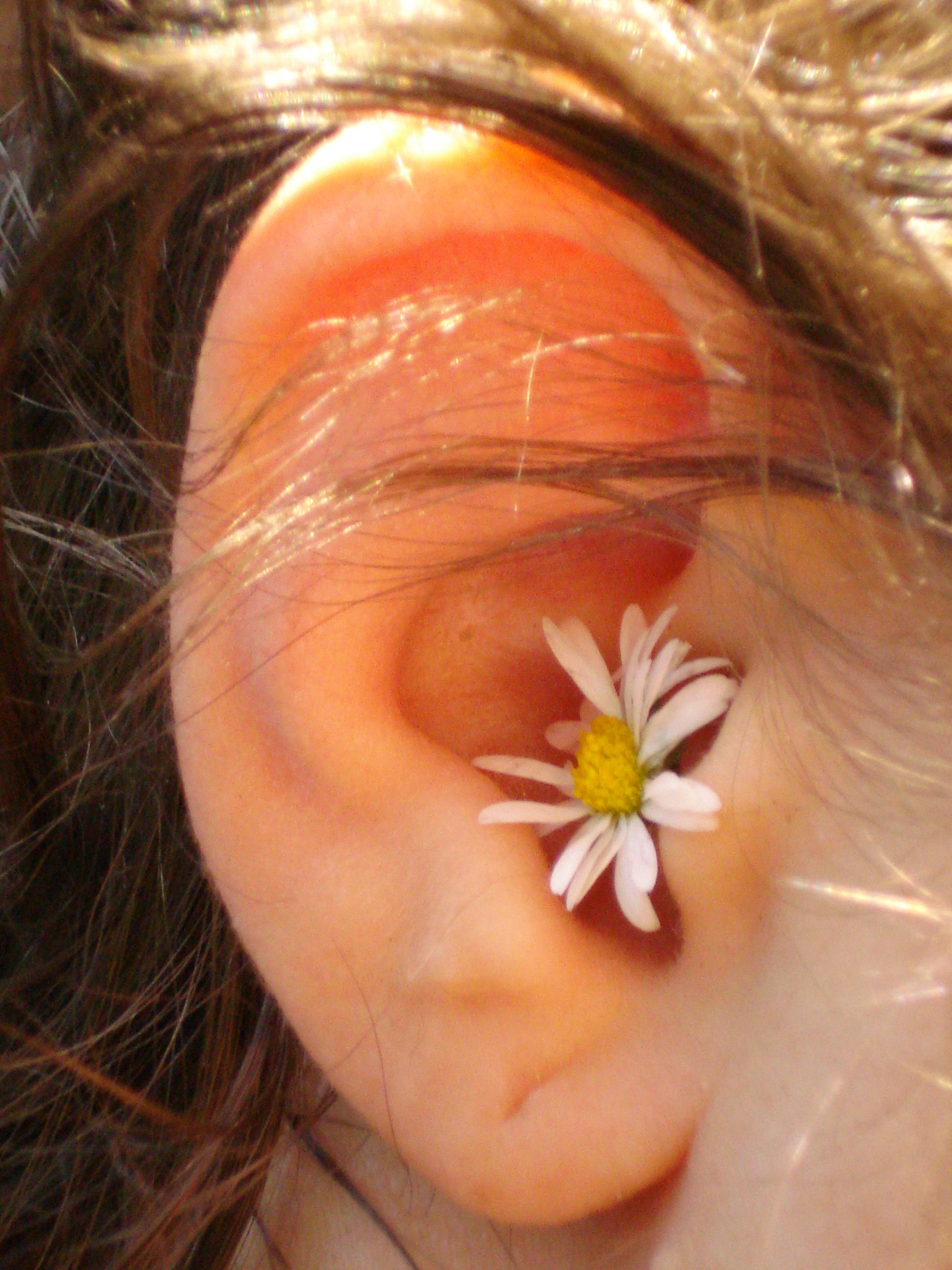 Blume-im-Ohr_MiABild.jpg