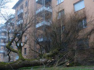 Bäume klopfen an