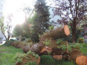 Bäume bleiben