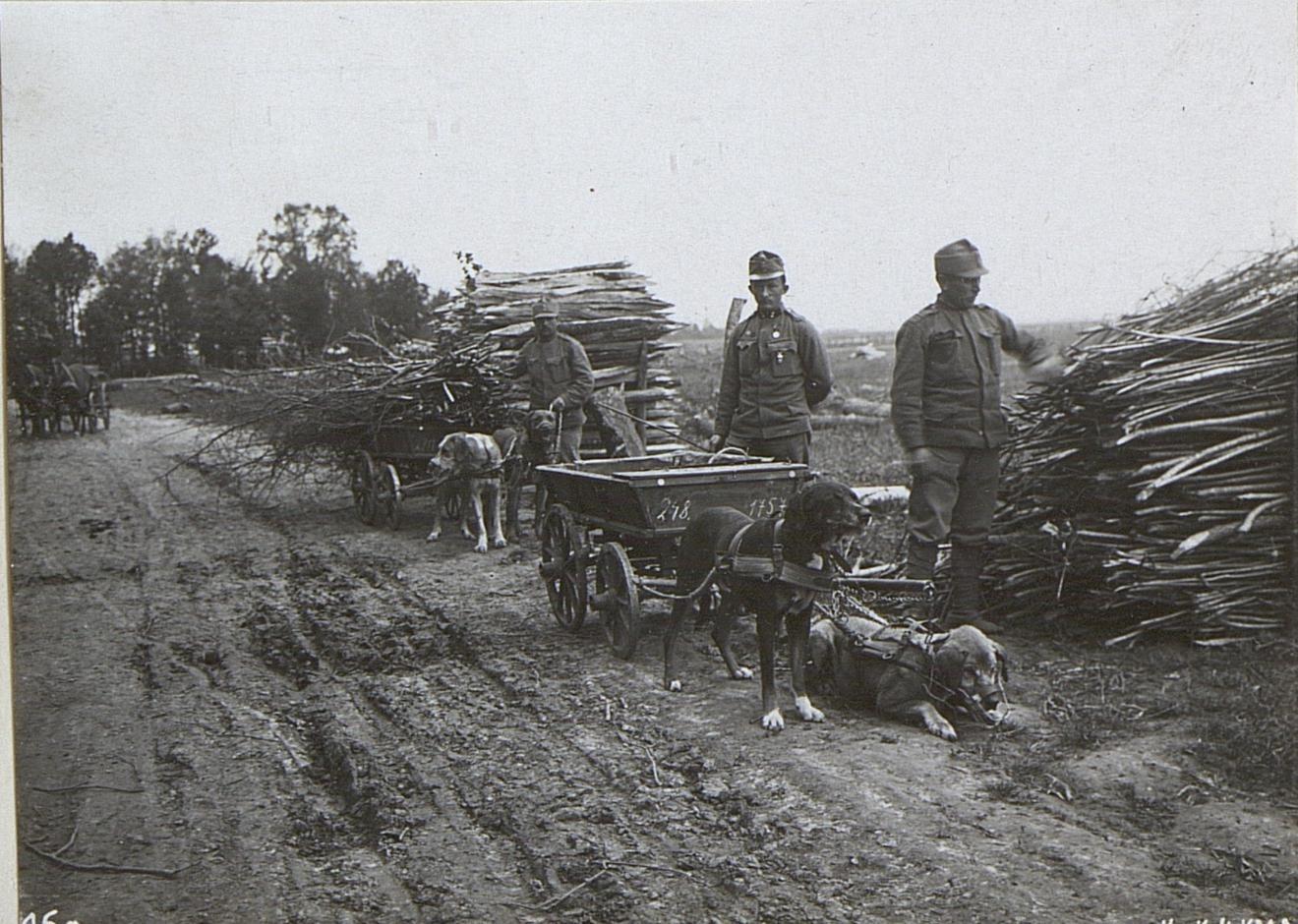 Dogs at work, Austrian Army. (Österreichsische Nationalbibliothek)