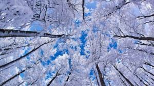 hd-winter-achtergrond-met-bomen